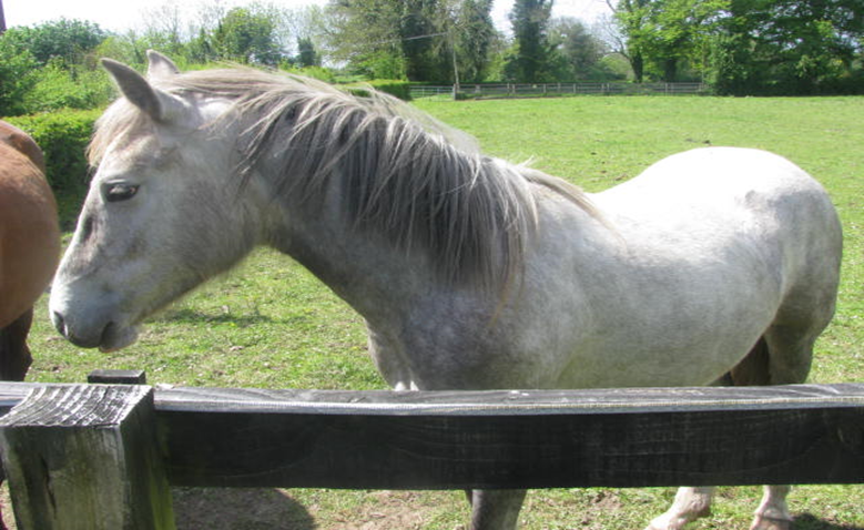healthy horse after treatment